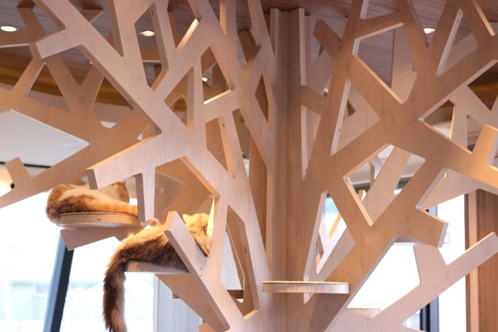 木のキャットタワー