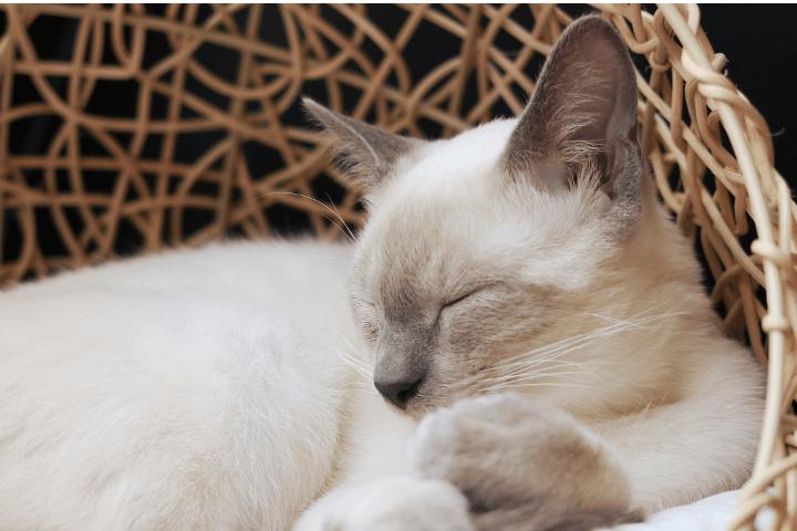 猫カフェMoCHA渋谷店|猫カフェMoCHA渋谷店