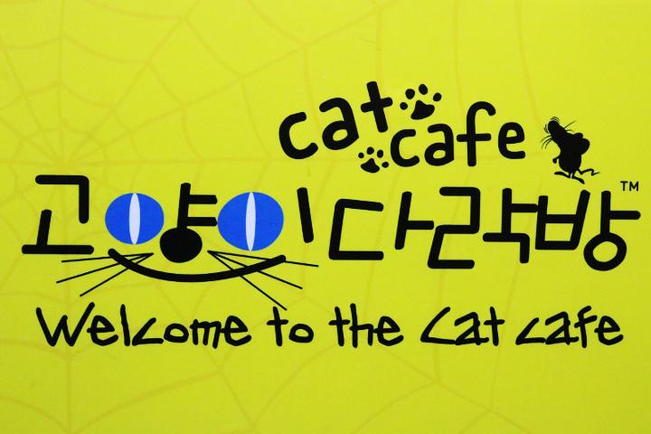 韓国の猫カフェ「猫の屋根裏部屋」