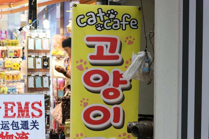 コヤンイは日本語で「猫」の意味