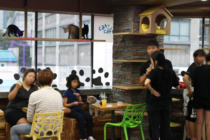 韓国の猫カフェ コヤンイタラッパンの中の様子