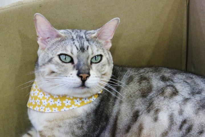 ヒョウ柄のスカーフ猫さん