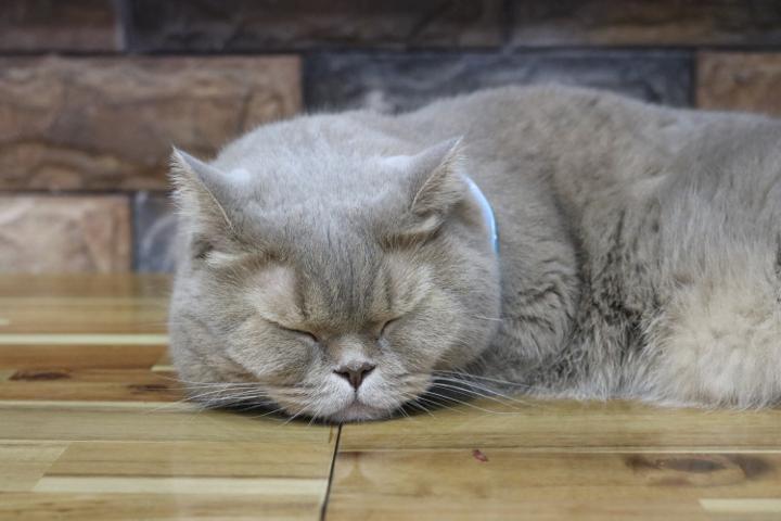 コヤンイタラッパンのスカーフ猫のtearyさん