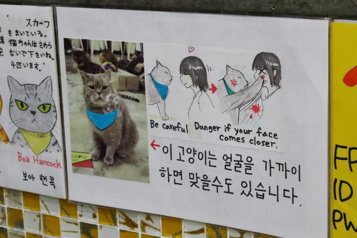 韓国の猫カフェ「猫の屋根裏部屋」の猫パンチの注意書き