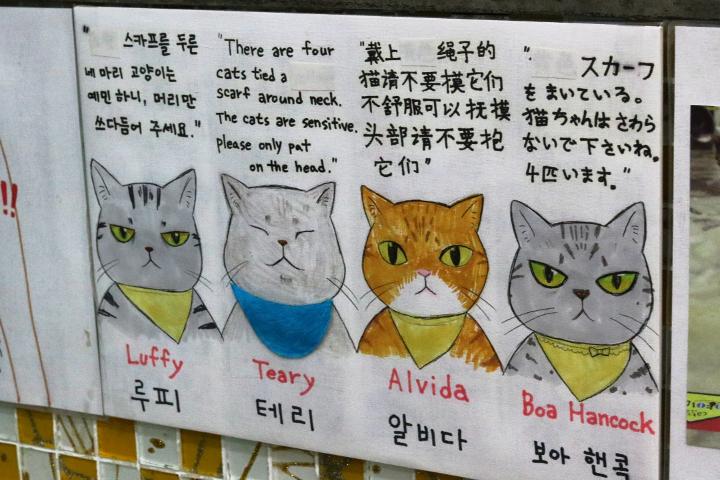 韓国の猫カフェ「猫の屋根裏部屋」のスカーフ猫さんたち