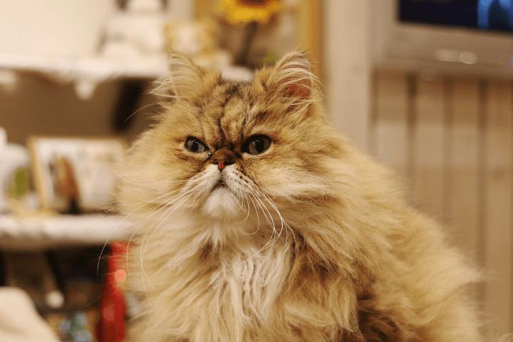下北沢の猫カフェキャテリアム|下北沢 Cateriam