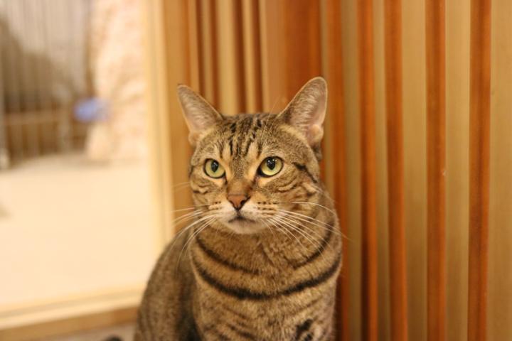 猫カフェキャテリアムのテラちゃん