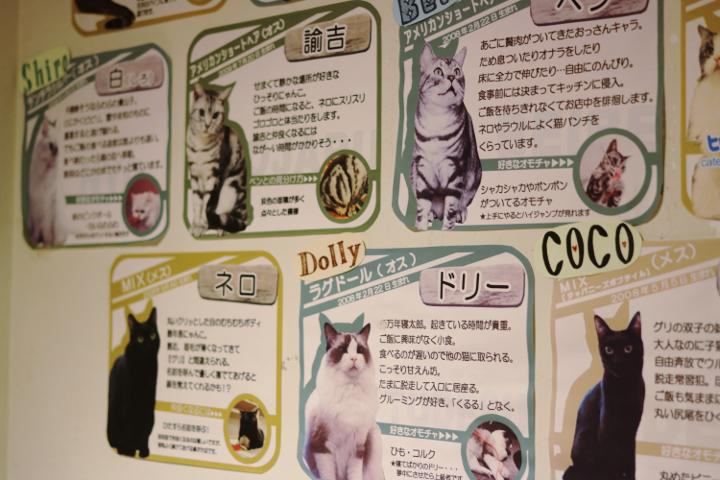 猫カフェキャテリアムの猫さんの紹介