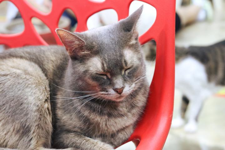ずっと一緒にいてくれた猫さん