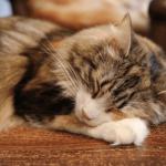 猫カフェRIEM|猫カフェRIEN(リエン)