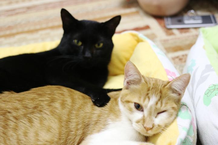 にゃんくるでは猫さんたちがみんな仲良し!よく一緒にベッドでお昼寝してます♪