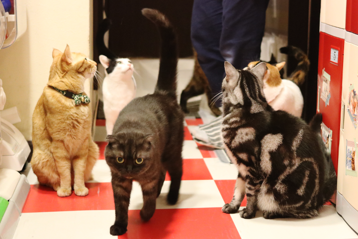 猫まるカフェでは、廊下を猫さんたちが常に駆け回ってます