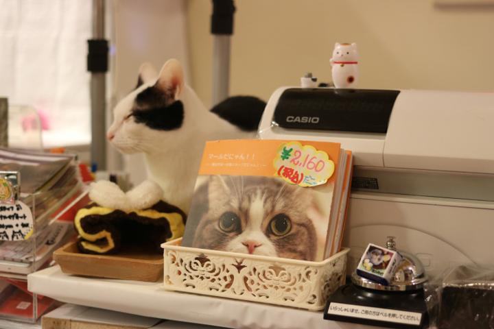 猫まるカフェさんでは、猫さんたちがいたるところがくつろいでいます