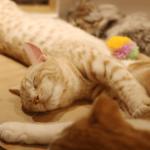 猫カフェMoCHA原宿店