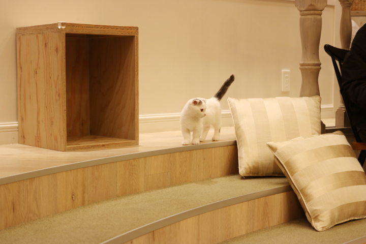 姿が現れただけで「かわいい」の声が部屋に響く|猫カフェMoCHA原宿店