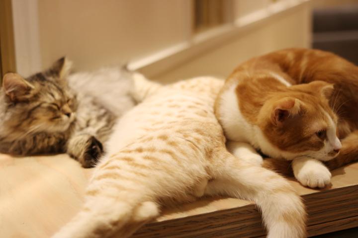 広々とした部屋の中で、くっついて過ごす仲の良いMoCHAの猫さんたち