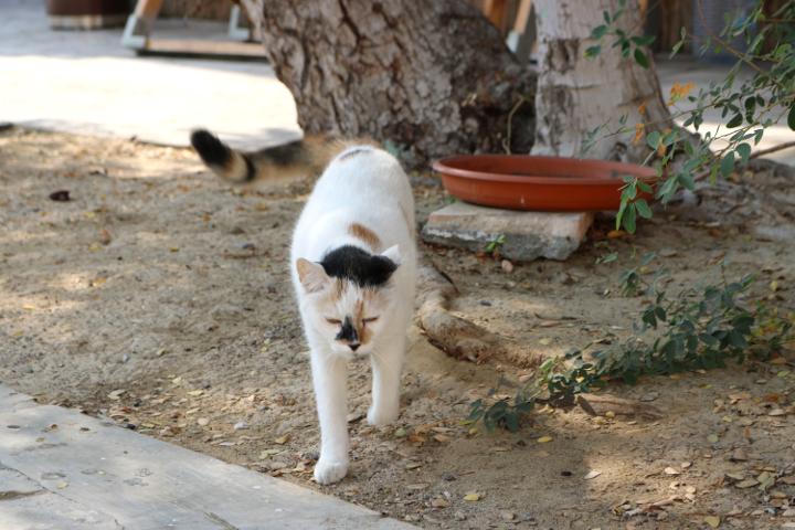 ドバイのバスタキア地区を歩いている時に出会った猫さん