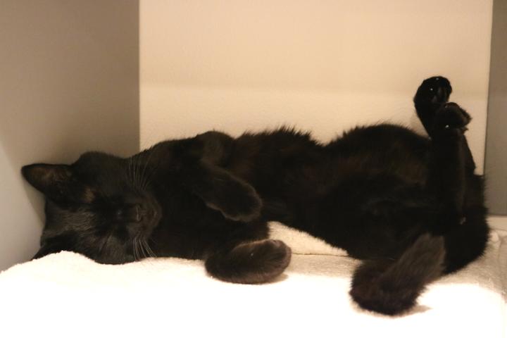 安心して、ずっと穏やかに眠り続けていました | ネコリパブリック池袋店