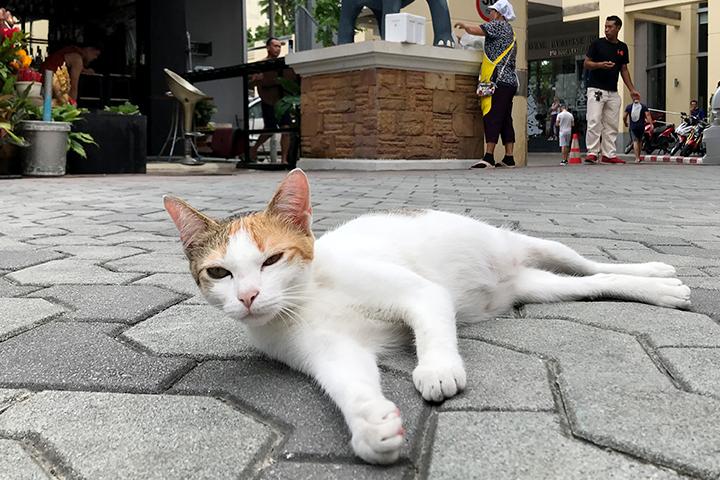 ロイヤルパラダイスホテル前の道端でくつろぐ猫さん