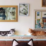 B Cat Cafe