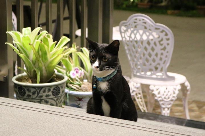 プーケットのDavid Residenceのエントランスで迎えてくれた猫さん