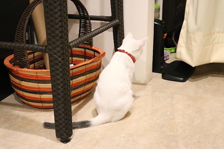 ご飯を食べてるお友達を覗き見中。チェックインカウンターの裏に猫さんの食事場所がありましたw