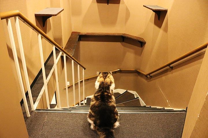 猫カフェきゃりこさんの新宿店は、5階と6階が店内で繋がっていて、猫さんも自由に行き来しています