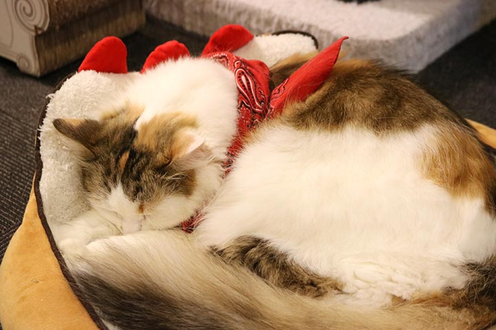 赤いスカーフの子は、おやつ禁止中ですー
