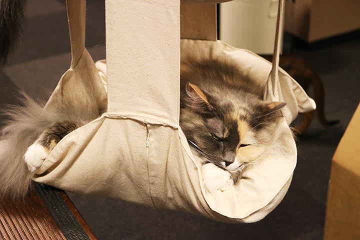 猫さん達に大人気なのが、このカゴ!ちょっと狭そうですが・・・