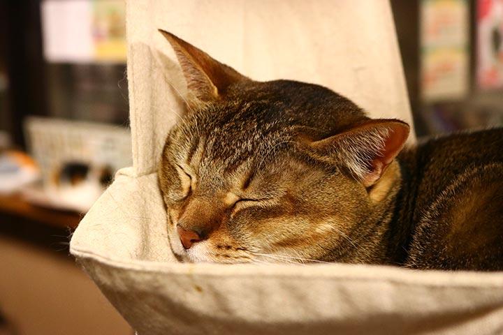 布バッグの棚は猫さんたちにとって寝心地が良さそうです