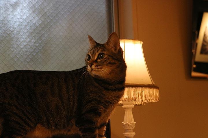 店内の端の方は少しほの暗く、おしゃれなライトに猫さんたちも照らされています