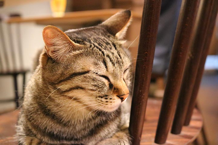 猫さんも空いているイスの上でおねむしています