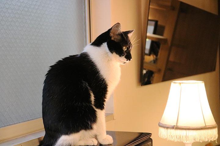 ライトの近くにスタッフさんがいることが多く、意外に猫さんたちもこの周りにいること多い