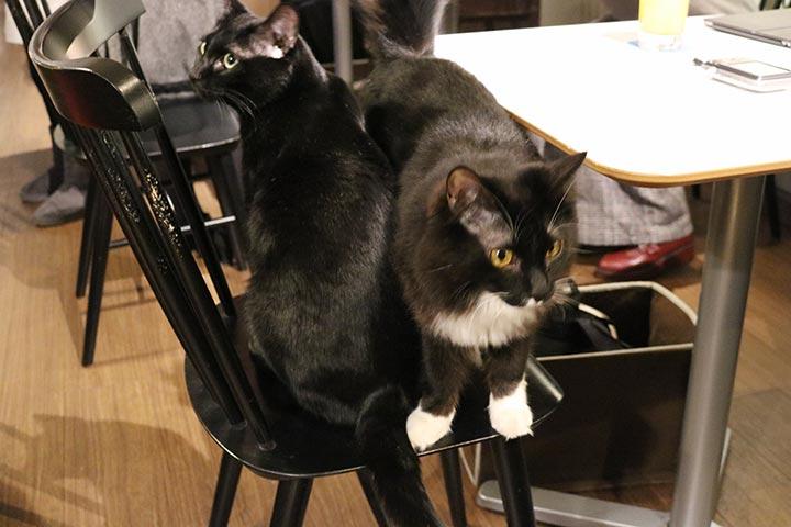 おやつタイムになると、イスに猫さんが密集してきます(笑)