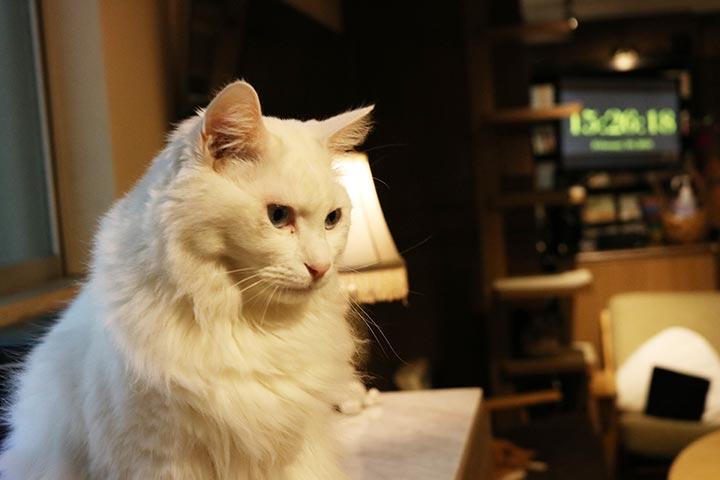 スタッフさんの強めのお尻ぽんぽんにもめげず(笑)、触れ合ってくれた猫さん