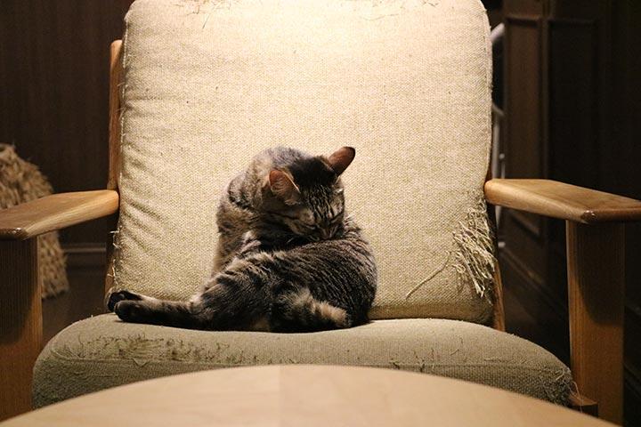 イスを贅沢に使う猫さん