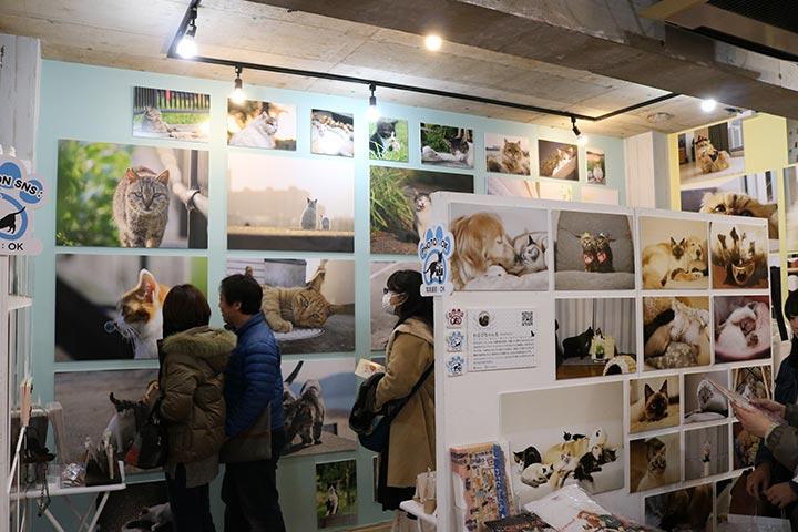 展示会の中はところ狭しと猫さんパネルが多数掲載されています