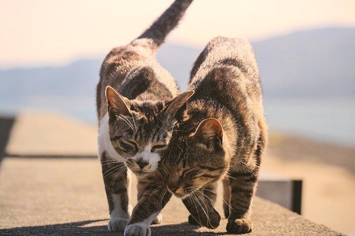 猫さんのほおづりって、本当に愛らしいですよね