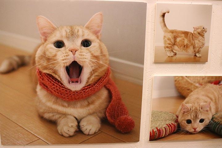 こんなにマフラーが可愛らしく似合う猫さんがいるだろうか・・・❤️