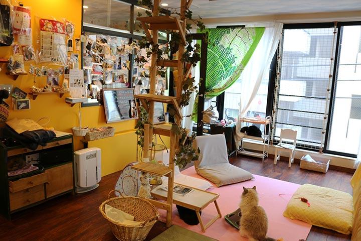 Kei'sのお部屋の中。決して広くはないのですが、猫さんたちが過ごすには十分な広さのように思えました