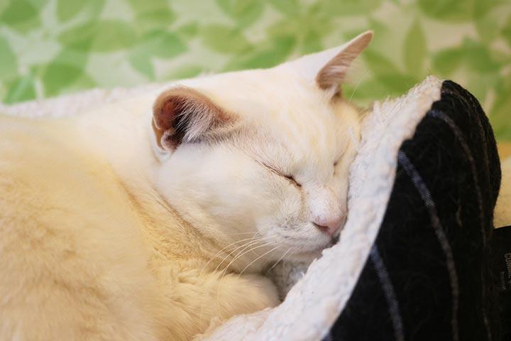 亀次郎くんが眠り続けていると・・・