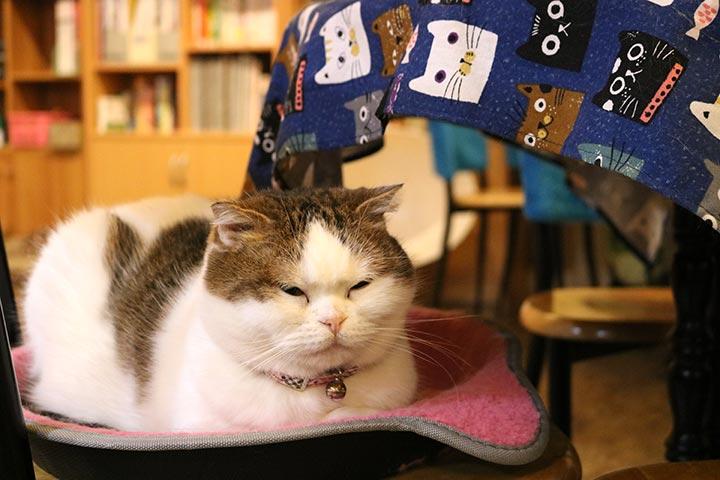 まんまる顔の花花(ホアホア)ちゃんはずっとテーブル席のお気に入りの場所でおねむしていました