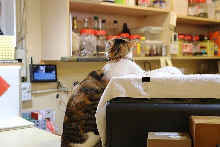 キッチンでご主人さんのお仕事ぶりを観察中