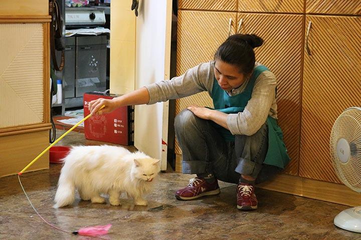 お店のスタッフさんがずっと猫さんたちを遊ばせてくれていて、猫さんもすごく反応がよかった(笑)