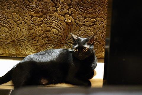 ちょっぴり人見知りする黒猫さん