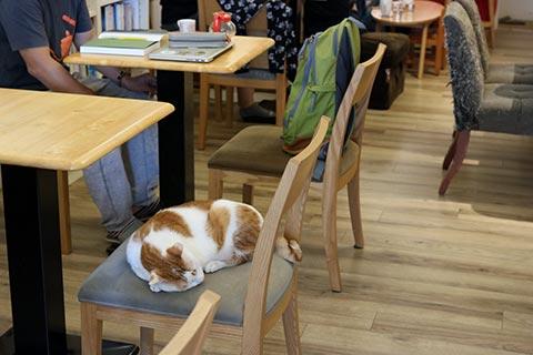 咖啡實驗室の中央でのんびり過ごしているダボちゃん